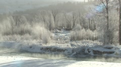Elk Winter Riparian Forest - stock footage