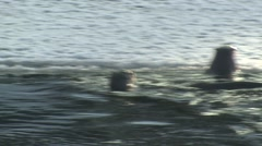 River Otter Family Winter Stock Footage