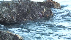 Starfish Several Winter Tidal Area Rocks - stock footage
