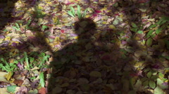 Shadow walking in forest, steadycam shot, slow motion shot at 240fps - stock footage