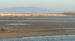 Ocean Monterey Winter Estuary Mudflat Birds Shorebird Coastal Stock Footage