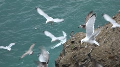 Closeup of cliff where many seagulls fly around and cry. With audio. - stock footage
