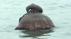 California Sea Lion Lone Resting Winter Buoy Handheld - stock footage