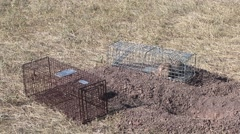 Stock Video Footage of Black-tailed Prairie Dog Lone Winter Trapped Cage