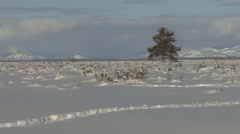 Prairie Grand Teton National Park Winter Snow Lone Tree Jackson Hole Stock Footage