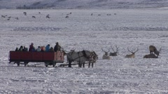 Stock Video Footage of Recreation National Elk Refuge Winter Sleigh Ride Wildlife Watching