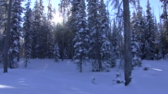 Forest Grand Teton National Park Winter Sun Flare Trees Snow - stock footage
