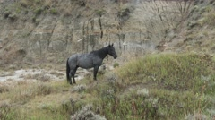Feral Wild Horse at Theodore Roosevelt National Park North Dakota Stock Footage