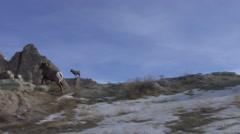 Bighorn Sheep Ram Adult Several Running Winter - stock footage