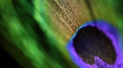 Close-up of a peacock feather - stock footage