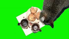 Cat with cups Stock Footage