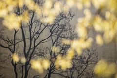 Bare tree at dusk - stock photo