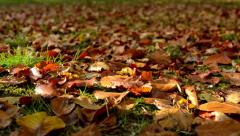 Autumn park - brown fallen leaves - sun rays - closeup - stock footage
