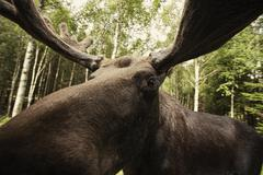 Close-up of reindeer in forest Kuvituskuvat