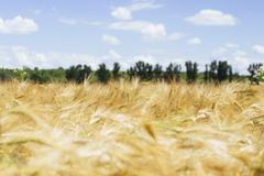 Agricultural field against cloudy sky Stock Photos