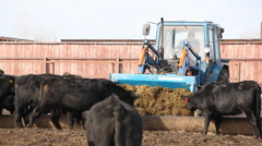 Farmer on a tractor brought hay to feed the cows Stock Footage