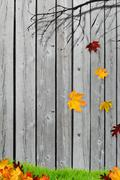 Falling autumn leaves in front of the fence Piirros