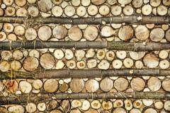 Natural wood log background Stock Photos
