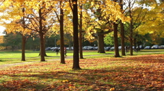 Golden Autumn Leaves Falling on the Ground Stock Footage