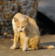 Portrait of a street cat outdoor Stock Photos