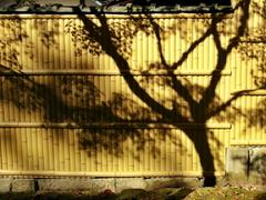 Stock Photo of Japan, Shadow of tree on bamboo fence