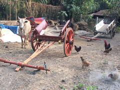 Stock Photo of India, Maharashtra, Alibaug village, Yard outside village home