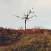 Ireland, County Kerry Ireland, Killarney, Munster, Lone tree in Kerry mountains - stock photo