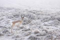 Deer in snow - stock photo