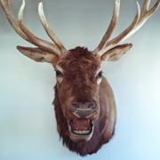 Animal head, Colorado, United States of America Stock Photos