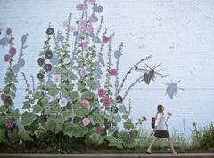 Woman walking by flowery wall Stock Photos