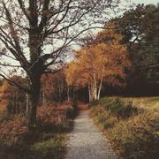 Ireland, Munster, County Kerry, Killarney, Autumn pathway in Killarney National - stock photo
