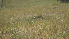 Autumn landscape. Meadow with wild flowers and green grass. Stock Footage