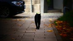 A old black Cat walking away Stock Footage
