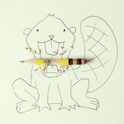 Conceptual beaver eating pencil - stock photo