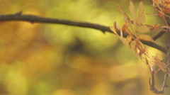 Autumn, dove on a branch Stock Footage