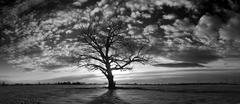 USA, Idaho, Bonneville County, Idaho Falls, Lonely and dreary tree - stock photo
