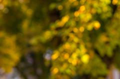 natural bokeh background in the autumn park. intentional motion blur. - stock photo