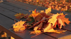 Autumn Leaves Late Afternoon Stock Footage