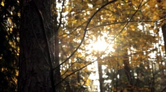 The tree in the forest on the background of the solar rays Stock Footage