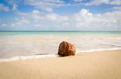Antigua and Barbuda, Antigua, Coconut on Hodges Bay Beach Stock Photos