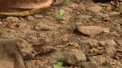 Leaf Cutter Ants Colony Winter Carrying Leaves Stock Footage