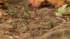 Leaf Cutter Ants Colony Winter Carrying Leaves Ground Level Stock Footage