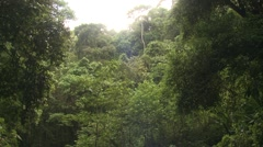 Forest Corcovado National Park Winter Rainforest Jungle Canopy - stock footage