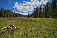 USA, Idaho, Boise, Boise National Forest, Long Creek Road, Field in Mountains Kuvituskuvat