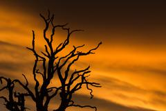 Close-up of bare tree branches against sunset sky - stock photo