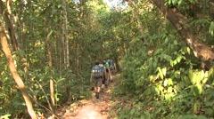 Recreation Corcovado National Park Winter Ecotourism Jungle Rainforest Hiking Stock Footage