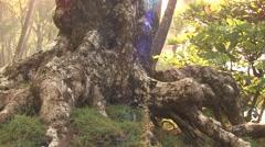 Leaf Cutter Ants Winter Stump Tree Stock Footage