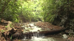 Forest Corcovado National Park Winter Jungle Canopy Trees Rainforest Stream Tilt Stock Footage