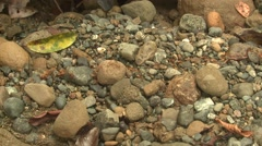 Ant Corcovado National Park Colony Walking Winter Rocks Jungle Rainforest Stock Footage