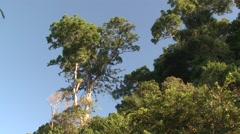 Forest Corcovado National Park Winter Jungle Canopy Tree Rainforest - stock footage